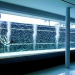Popular Meera House Pool Design Ideas by Guz Architects