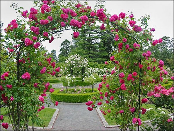 Small rose garden design for Beautiful small gardens