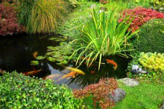 Eco-Friendly Sanctuary